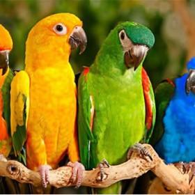 Кратко ръководство за грижа към папагала